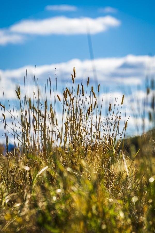 Megalong Valley Grass